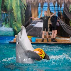 Дельфинарии, океанариумы Приволжска