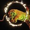 Цирки в Приволжске