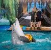 Дельфинарии, океанариумы в Приволжске