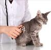 Ветеринарные клиники в Приволжске